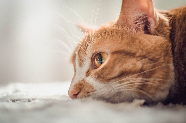 best hypoallergenic cat food