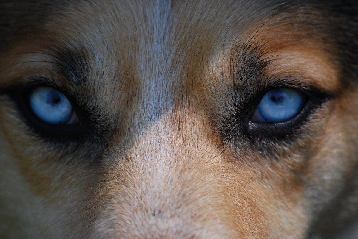Are dogs colorblind?
