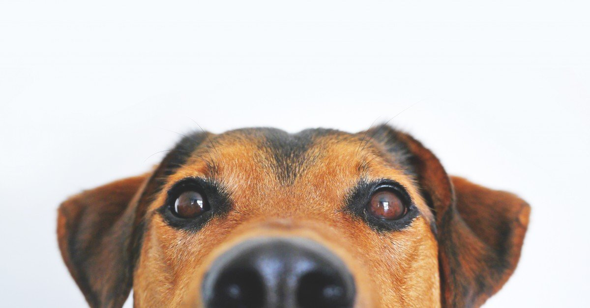 Are dogs colorblind? - How do dogs see the world?